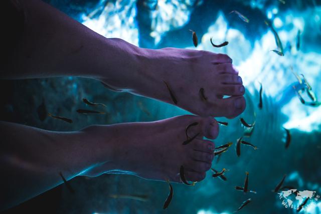セノーテイスラアラモの魚と足