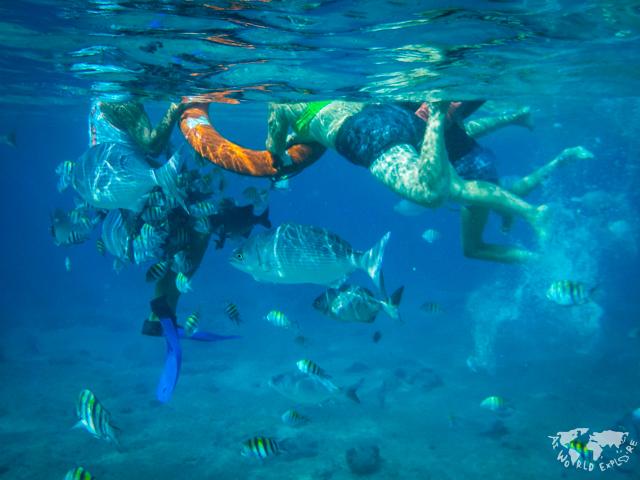 メキシココスメル島のシュノーケルポイント