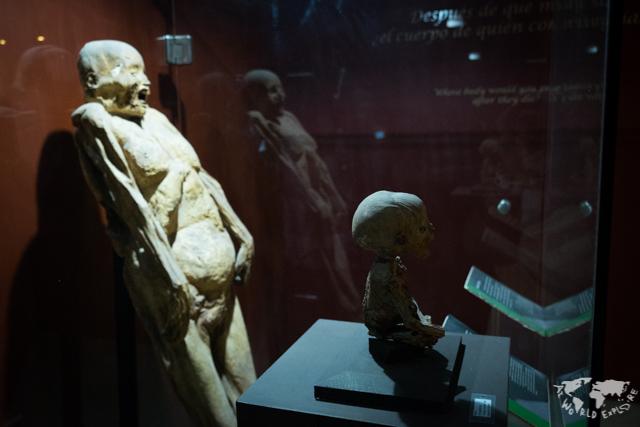グアナファトのミイラ博物館の親子のミイラ