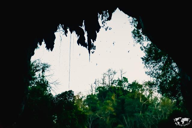 タイのタムロッド洞窟のこうもり