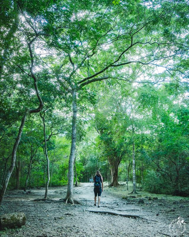 メキシコカンペチェのエズナ遺跡のジャングル
