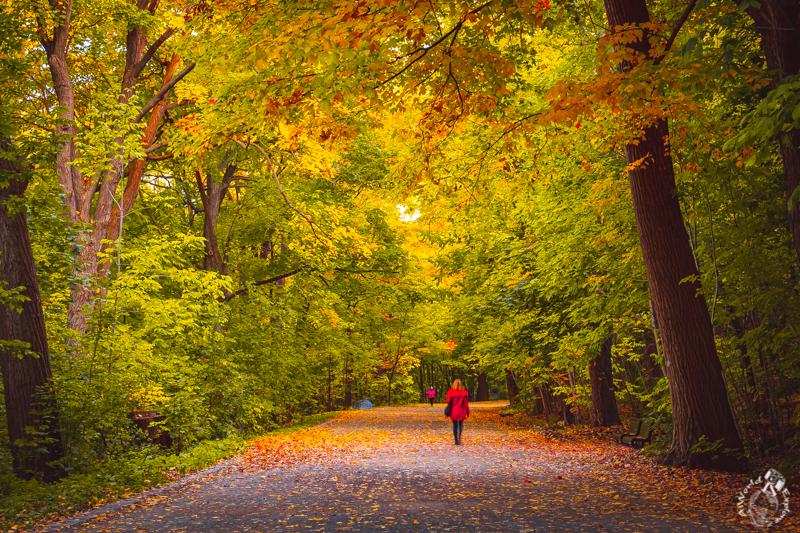 モントリオールの紅葉
